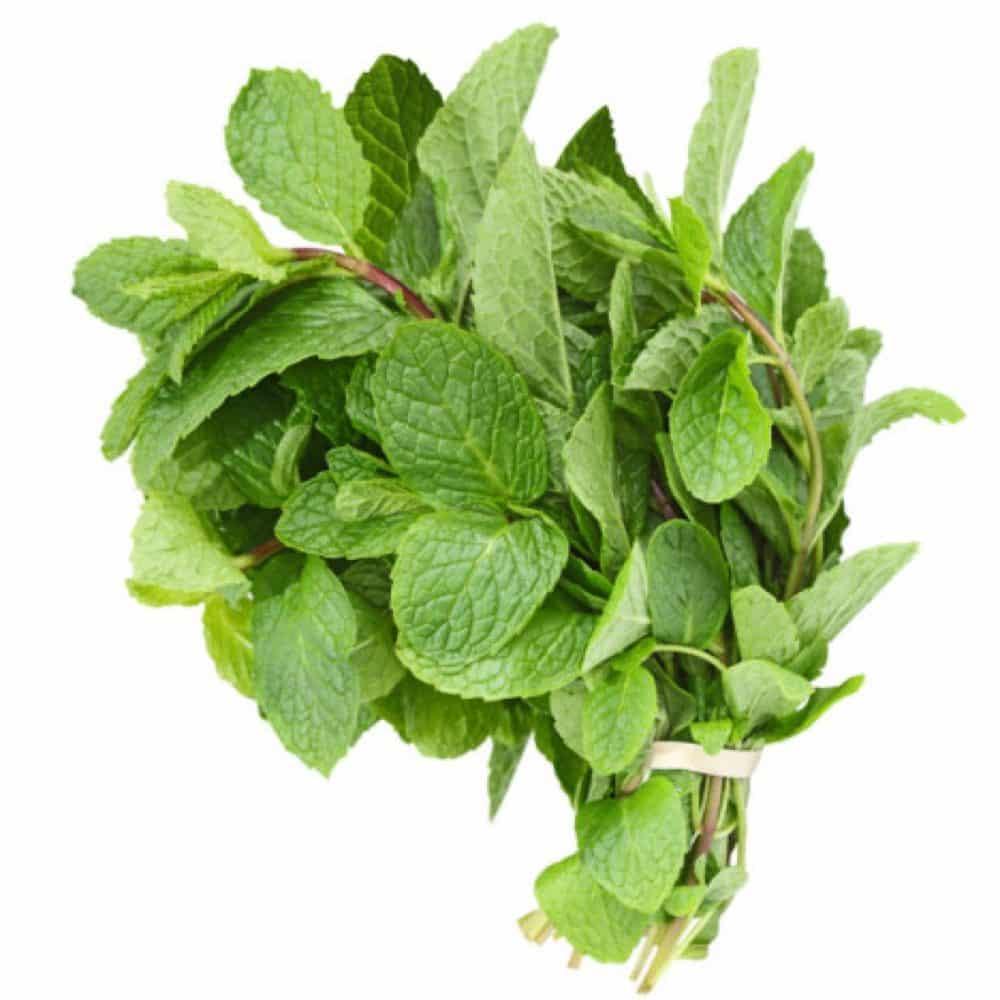 fresh mint ingredient